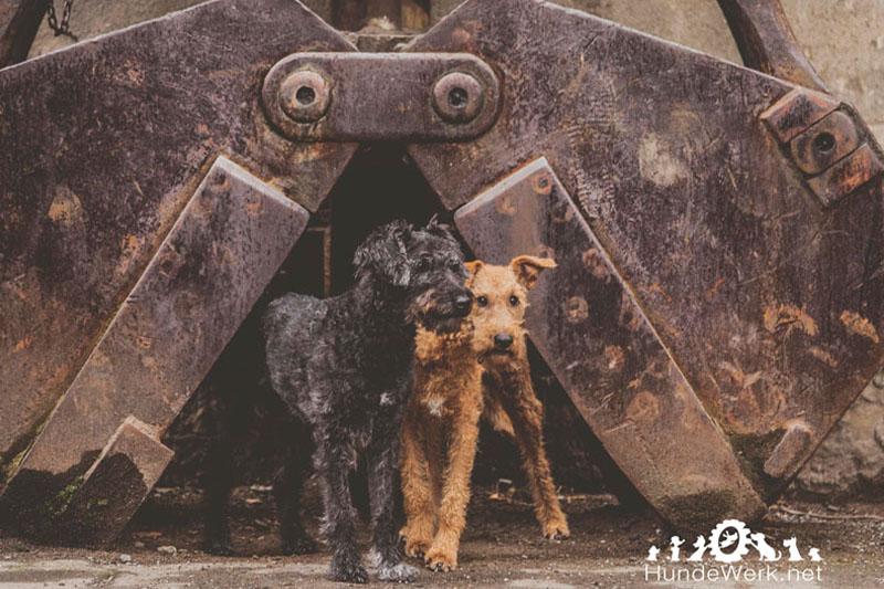 Hundetrainer Düsseldorf