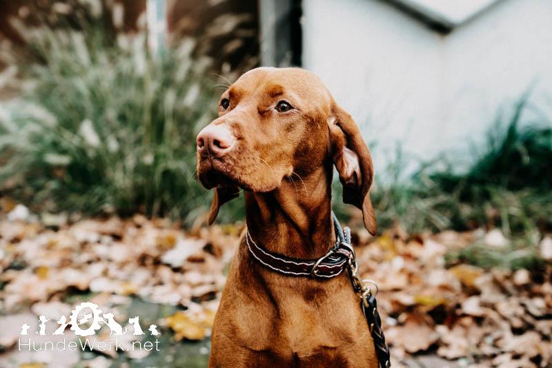Hundewerk11