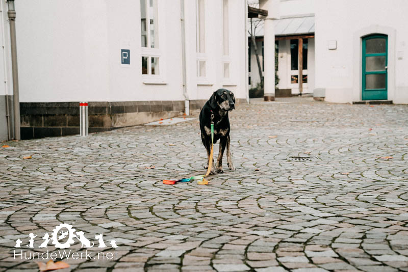 Hundewerk13