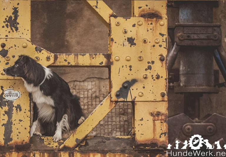 Industrial Dogs