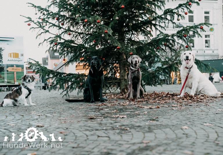 Hundewerk1543