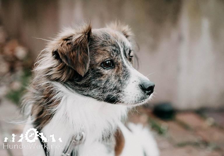 Hundewerk156