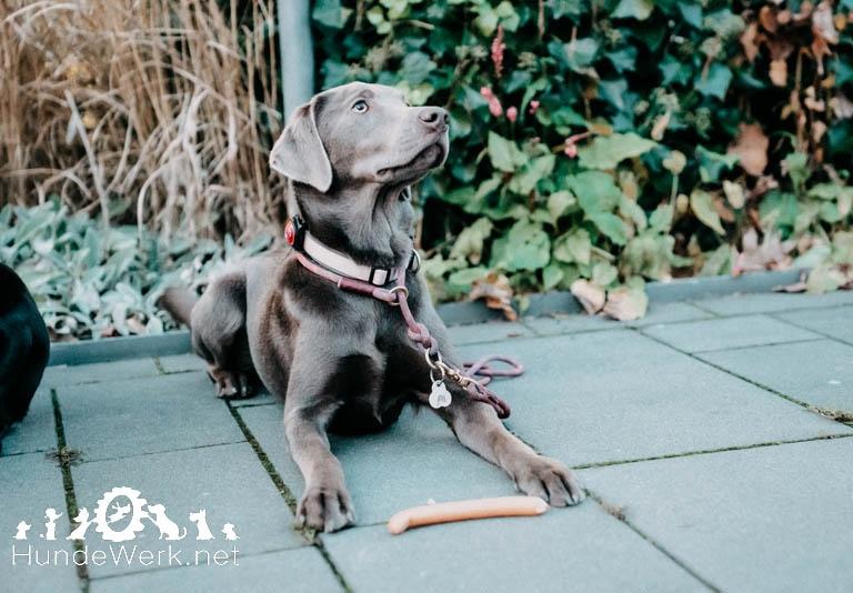 Hundewerk165