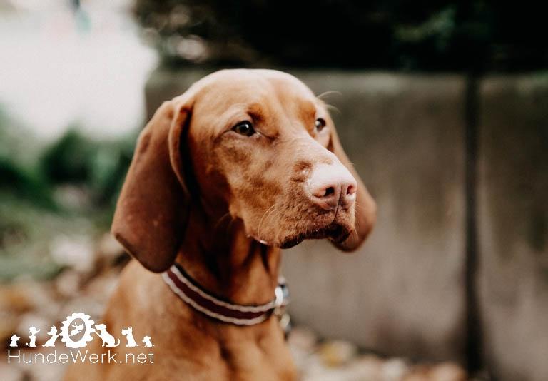 Hundewerk10