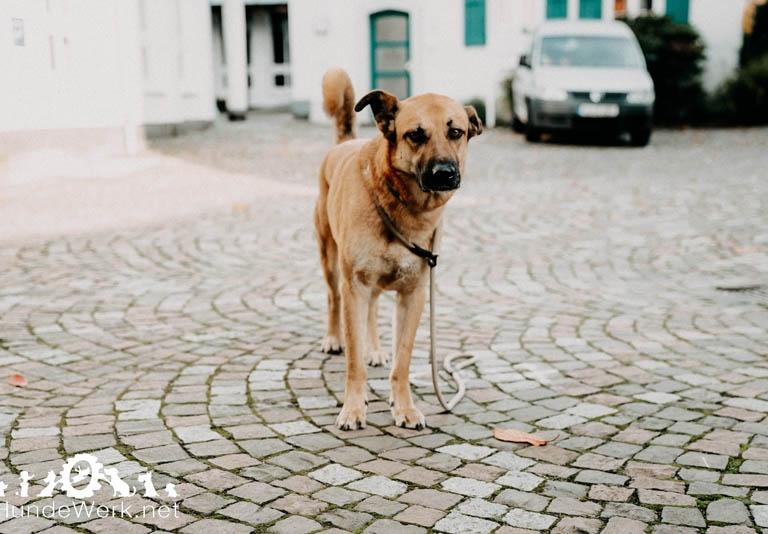 Hundewerk14