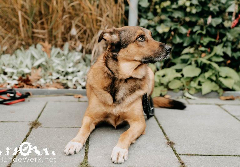 Hundewerk17