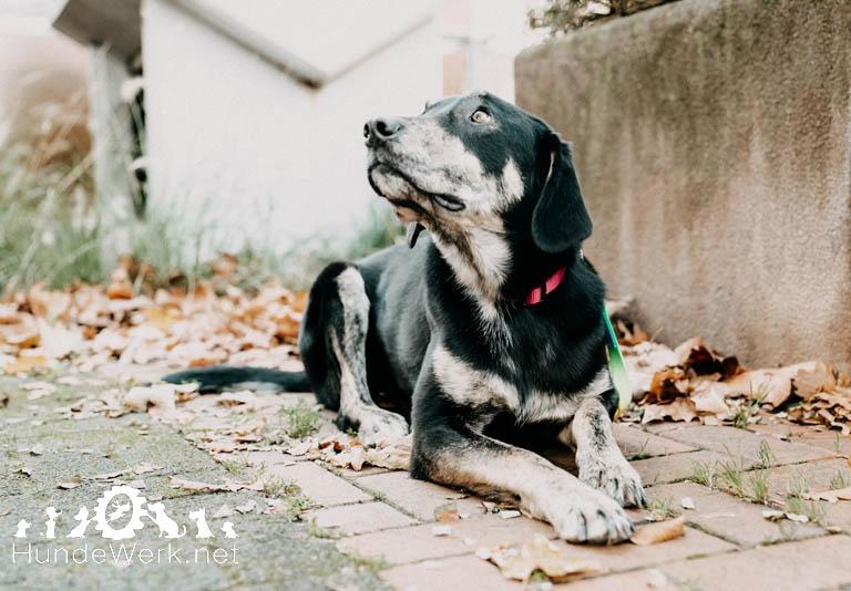 Hundewerk1