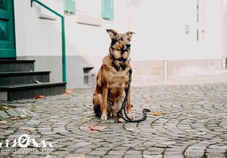 Hundewerk 12