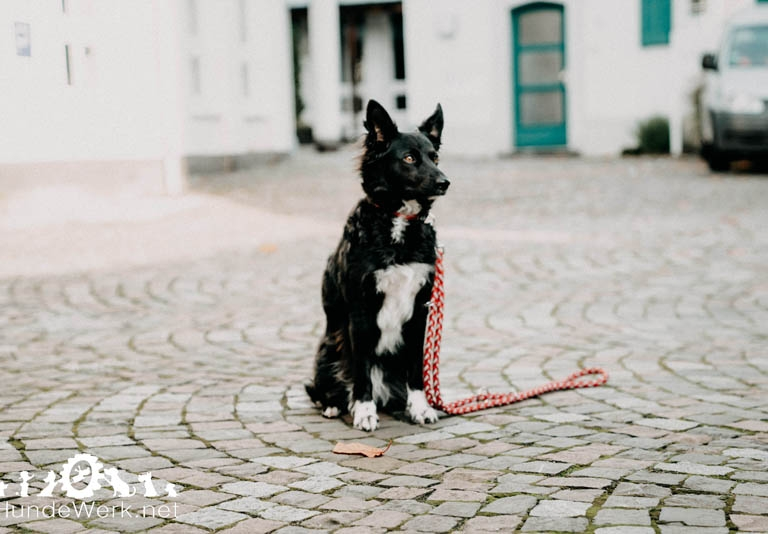 Hundewerk