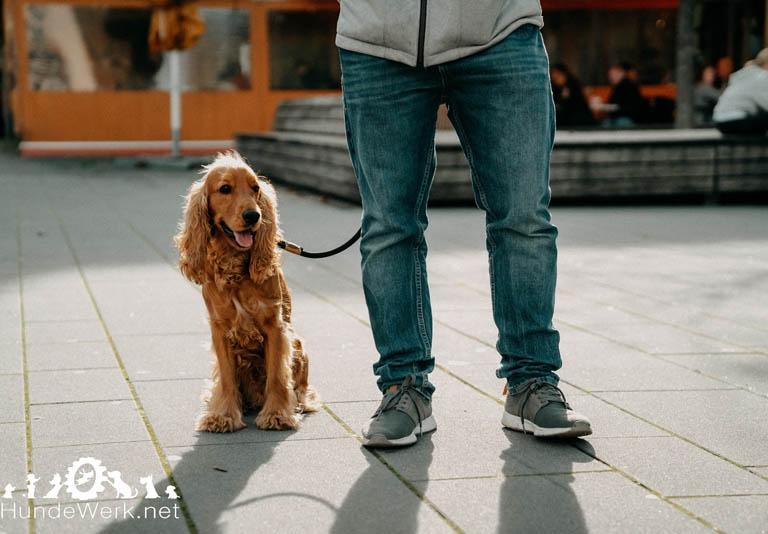DSC00057 Hundewerk