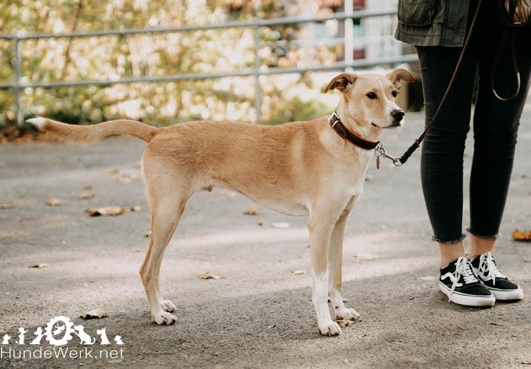 DSC00082 Hundewerk