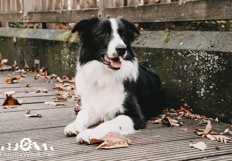 DSC00114 Hundewerk