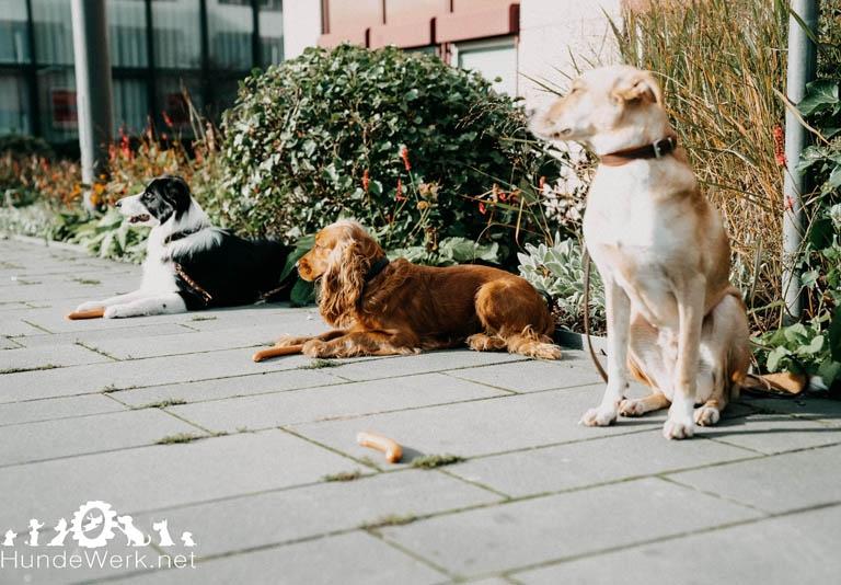 DSC00479 Hundewerk