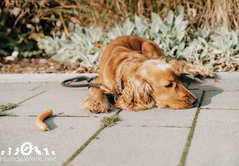 DSC00485 Hundewerk