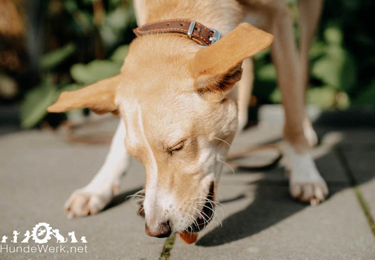 DSC00499 Hundewerk