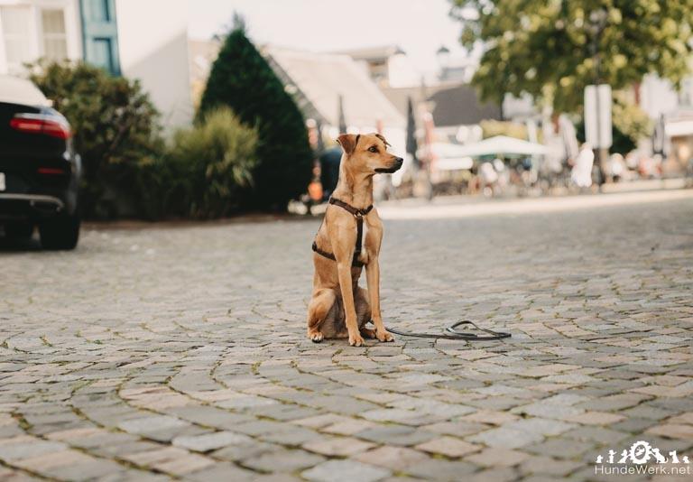 HundewerkPrüfungSeptember.7