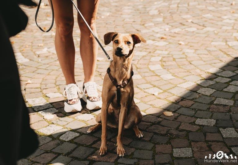 HundewerkPrüfungSeptember.8
